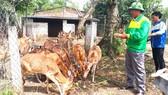 Nuôi đàn hươu sao đang giúp nhiều hộ dân ở Hà Tĩnh tăng thu nhập và làm giàu