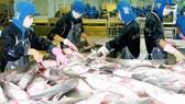 """Ngành cá tra năm 2018 ở ĐBSCL """"được mùa được giá"""""""
