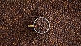 Nhà máy sản xuất cà phê thân thiện môi trường