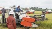 Nông dân ĐBSCL thu hoạch lúa đông xuân
