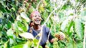 Dự báo cà phê châu Phi lên ngôi