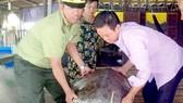 Nhận bàn giao cá thể rùa quý hiếm do ngư dân bắt được và thả về môi trường tự nhiên