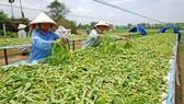 Kết nối giải pháp để phát huy tiềm năng về dược liệu Việt Nam