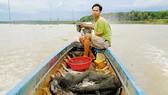 Người dân làng vó mưu sinh trên sông Sài Gòn