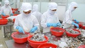 Chế biến tôm xuất khẩu tại một công ty ở Việt Nam. Ảnh minh họa