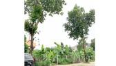 Biến đất công viên thành chung cư