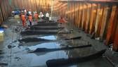 Khai quật khẩn cấp tàu cổ đắm tại vùng biển Dung Quất