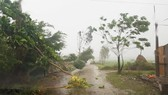 Trong 12 giờ tới, bão số 11 tiếp tục suy yếu dần thành áp thấp nhiệt đới