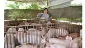 Cần liên kết trong chăn nuôi nông hộ