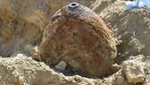 Đầu quả bom nằm dưới mặt đất ở Ludwigshafen. Nguồn: rte.ie