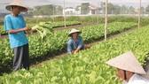 Hợp tác cung ứng nông sản an toàn