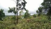 Cách chức Phó Chủ tịch UBND huyện vì lấn chiếm đất rừng