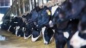 Tập đoàn TH sản xuất thành công sữa tươi A2
