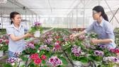 Trồng hoa trong nhà lưới tại Trung tâm Công nghệ sinh học TPHCM. Ảnh: THÀNH TRÍ