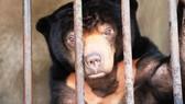 Không nuôi nhốt động vật hoang dã trong khuôn viên trường học