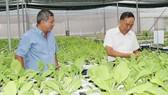 Trồng rau thủy canh tại HTX Xuân Lộc (quận 12, TPHCM). Ảnh: Đăng Lãm