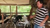 Tổ hợp tác nuôi dê xã Tân Thành đang hướng tới sự phát triển bền vững và an toàn