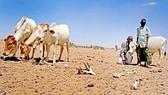 LHQ hỗ trợ Ethiopia khắc phục hạn hán