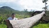 Rừng khộp ở huyện Ea Súp (Đắk Lắk) bị doanh nghiệp chặt phá để trồng cao su. Ảnh: CÔNG HOAN