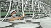 Gia tăng tính cạnh tranh từ sản xuất xanh