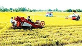 Kiến nghị chuyển mục đích sử dụng các dự án đất trồng lúa