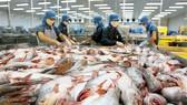 Xuất khẩu cá tra đạt trên 1,75 tỷ USD