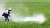 EP điều tra chất Glyphosate trong thuốc diệt cỏ