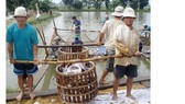 Ngành cá tra đối diện thách thức mới