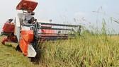Định vị sản phẩm nông nghiệp