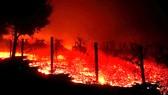 Cháy rừng lịch sử ở California, ít nhất 42 người chết