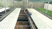Nông dân huyện Nhà Bè áp dụng mô hình nuôi tôm kết hợp trồng rau thủy canh