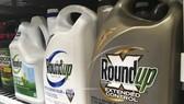 Monsanto bồi thường 80 triệu USD vì thuốc Roundup