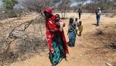 Đông và Nam châu Phi: Hạn hán nặng nề, hơn 4 triệu người bị đói