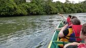 Du khách tham quan rừng ngập mặn ở Brunei  