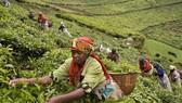 Giúp việc ở Phi châu