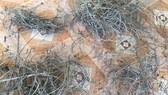 Phát hiện dày đặc bẫy săn bắt động vật rừng trái phép