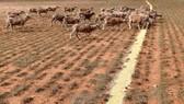 Nguy cơ khủng hoảng nguồn nước ở Australia