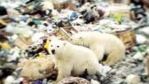 Gấu trắng xâm nhập khu dân cư