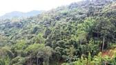 Đẩy mạnh ứng dụng công nghệ viễn thám để bảo vệ rừng