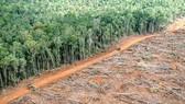 50 triệu ha rừng bị tàn phá trong vòng 10 năm qua. Ảnh: Greenpeace