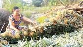 Tháo nút nghẽn phát triển Đồng bằng sông Cửu Long