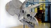 Xương khủng long hóa thạch 68 triệu năm