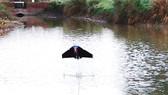 Robot cá bay phục vụ nghiên cứu môi trường