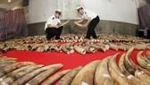 China police seize ivory smuggled via Vietnam border