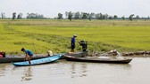 Mekong floodwaters rising: NCHMF