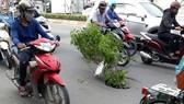 Để cảnh báo cho người đi đường, người dân đã dùng cành cây cắm xuống và báo chính quyền địa phương