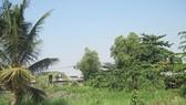 Còn nhiều vướng mắc trong quản lý đất nông nghiệp, lâm nghiệp