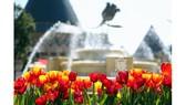 Bà Nà mùa Xuân đẹp lộng lẫy với muôn hoa đua nở