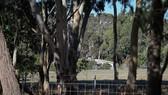 Australia: Phát hiện 7 người bị bắn chết
