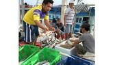 Một vựa thu mua cá ở Bạc Liêu. Ảnh: CAO THĂNG